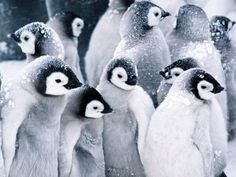 The ever new collection of penguin high definition desktop background wallpaper
