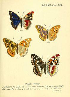 Die Schmetterlinge in Abbildungen nach der Natur. v.1 plates.  Leipzig :T.O. Weigel,[1829-1839]  biodiversitylibrary.org/item/53436