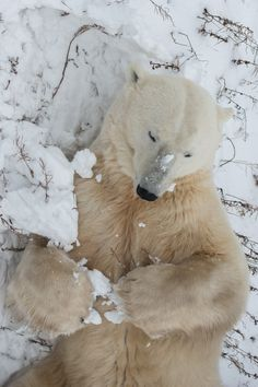 CHURCHILL, Manitoba, Canada ------------------- Arctic safari: 13 stark images from the land of polar bears
