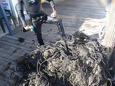 Rope removed from prop and running gear- http://mrsgdiving.com/commercial-diver-services.shtml
