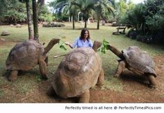 The Galapagos Tortoises | Perfectly Timed Pics