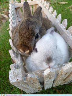 These bunnies take pictures like we do....smoosh in!