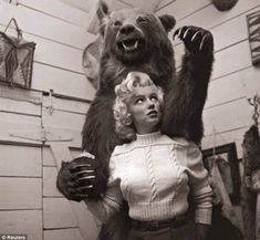 amigo urso