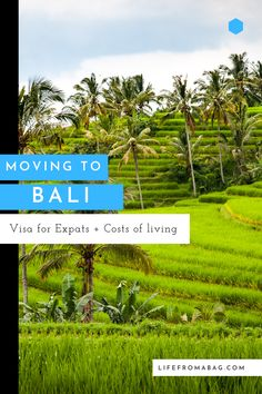 Guide to relocating to Bali - Where to stay in Bali, Things to do, cost of living and how to adapt to life in Bali Travel Guides, Travel Tips, Travel Destinations, Beautiful Places To Visit, Cool Places To Visit, Japanese Travel, Bali Travel, Travel Photos, Travel Inspiration
