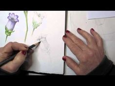 Botanica Basics - Drawing and Painting a flowerPart 1.mov