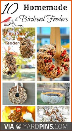 Neato -  | Check out these other cool ideas for tasty bird feeders here at yardpins.com | #birdfeeders #birds #aviary #gardens #gardening #botany #horticulture #flowers #trees #plants