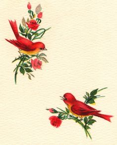 https://flic.kr/p/9EPjtn | Vintage birds | Bird images from a vintage greeting card. Blogged about here: www.collagecandy.blogspot.com