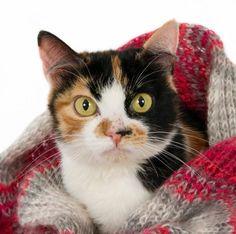Remédios caseiros para a gripe em gatos. Sabia que existem remédios caseiros…