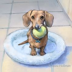 Laura Hoffman Illustration & Design: My Muse: Penny the Dachshund
