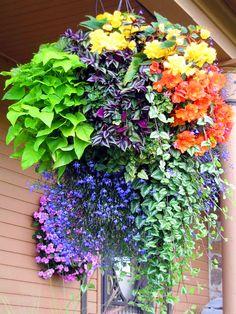Hanging basket of loveliness