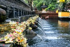 https://flic.kr/p/kqGkTq | Purifying Pool | Pura Tirta Empul  (Temple of Holy Water) | middle Bali - Indonesia