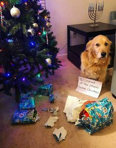 Dogs Christmas dog shaming picture of a dog that opened the presents. Dog Quotes Funny, Funny Dogs, Funny Animals, Cute Animals, Funny Humor, Dog Christmas Pictures, Christmas Dog, Christmas Humor, Dog Shaming Pictures