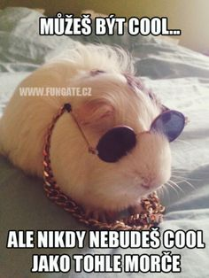 Funny Moments, Guinea Pigs, Haha, Jokes, Humor, Facebook, Cool Stuff, Animals, Cool Things