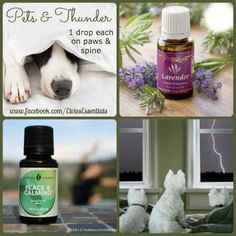 Young Living Lavender and Peace & Calming for pets and thunder www.fb.com/essentialliving180