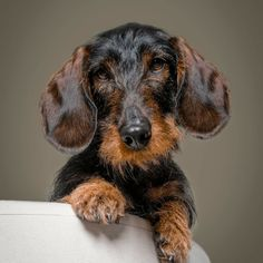 Unique Dog Breeds, Best Dog Breeds, Dog House With Ac, Shepard Dog Breeds, Big Dog Toys, Miniature Dog Breeds, Schnoodle Dog, Outdoor Dog Toys, Cheap Dog Food