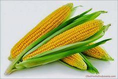 Manfaat Jagung Untuk Kesehatan Tubuh Kita,- Jagung merupakan bahan makanan yang biasa kita temui dalam sereal. Jagung sebenarnya memiliki banyak manfaat untuk kesehatan kita. Diantaranya, jagung sangat baik...