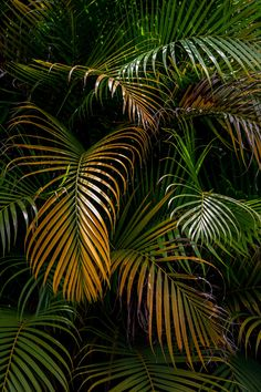 Find Palm Leaves stock images in HD and millions of other royalty-free stock photos, illustrations and vectors in the Shutterstock collection. Plant Wallpaper, Wallpaper Backgrounds, Iphone Wallpaper, Wallpapers, Plant Aesthetic, Tropical Plants, Go Green, Shades Of Green, Planting Flowers