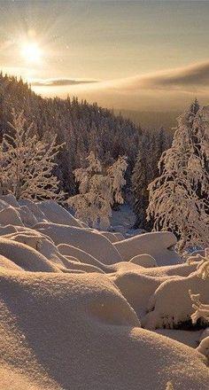Beautiful Winter Landscape - from Winterberry