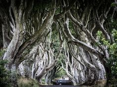 The Dark Hedges-. Hedges, Landscape Photography, The Darkest, Landscapes, David, Plants, Paisajes, Scenery, Scenery Photography