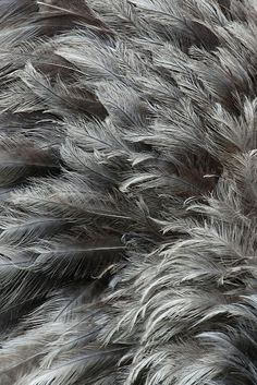 inspiration: SCANDINAVIAN STYLE RENOVATION Grey Feathers - natural colours & light wispy textures for organic, bird inspired designGrey Feathers - natural colours & light wispy textures for organic, bird inspired design Feather Background, Textured Background, Dark Grey Background, Golden Background, Paper Background, Funny Bird, Essie, Scandinavian Style Home, Gray Aesthetic