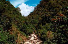 Tropical Wilderness: Mencermati Sebuah Nasehat