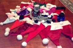 Santa hats!!! 2015