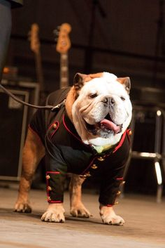 extremely dapper bully..