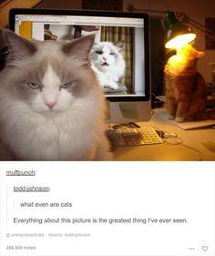 Ich meine, guck dir nur mal dieses Bild hier an.   15 Beweise, dass wir Katzen gar nicht verdient haben