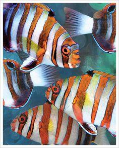 Harlequin Tusk 2 Giclee Art Poster Print