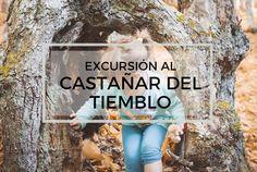 El castañar del Tiemblo es uno de los sitios más bonitos que hay en la provincia de Ávila. Hace unos años tuvimos una casa allí, así que es un sitio al que tenemos muchísimo cariño. No sólo el pueblo era bonito y la gente muy amable -a pesar de ser foráneos-, sino que los alrededores …