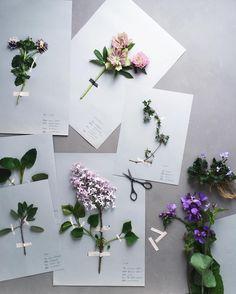 Preparation of Plant Speciments. #frommygarden #lilac  昨年は全く咲かなかった庭のライラック 今年は数輪咲いてくれました折角だから 他の草花と一緒に押し花にでもしてみようかな by nonihana_