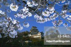 Spring blossom and Himeji Castle (Himeji-jo), built in 1580, UNESCO World Heritage Site, Himeji, west Honshu, Japan, Asia