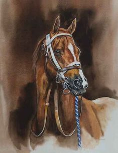 peintres judy gibson - Page 3 Pretty Horses, Horse Love, Beautiful Horses, Horse Photos, Horse Pictures, Horse Drawings, Animal Drawings, Watercolor Animals, Watercolor Paintings