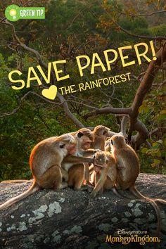 Monkeys like shade too! Think before you print. Monkey Kingdom, Disney Movies Anywhere, Green Tips, Jewish Food, Cute Monkey, Food Festival, Natural Wonders, Monkeys, Disney Parks