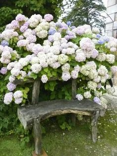 Hydrangea bench ... the perfect place for reading