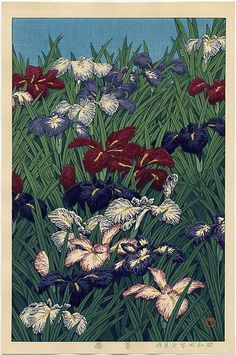 Irises. Welcome to my gardening blog http://www.facebook.com/flowerindoorgardening #iris #flower #bulb