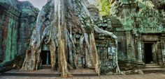Ta Prohm,Siem Reap,Cambodia Archaeological Survey Of India, Ta Prohm, Modern Names, Siem Reap, Growing Tree, Angkor, Most Visited, Cambodia, World