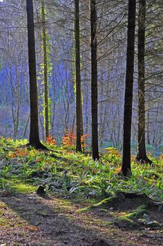 Colours Of The Forest At Rosemoor is a photograph by David ELLIOTT. Sunlit colours in the forest at RHS Rosemoor, near Great Torrington, North Devon,England. Source fineartamerica.com