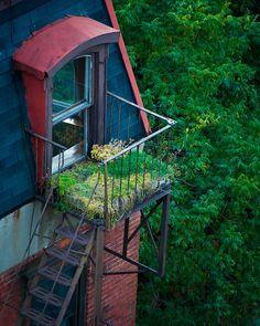 Urban garden on fire escape #Garden, #NYC