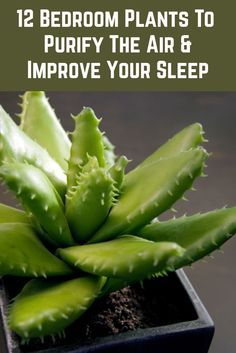12 Bedroom Plants To Purify The Air & Improve Your Sleep - - These plants purify and clean the air and create a sense of calm and relaxation. Place a few in your bedroom to improve your sleep quality. Best Indoor Plants, Indoor Plants Clean Air, Air Plants, Inside Plants, Bedroom Plants, Do It Yourself Home, Improve Yourself, Plant Care, Growing Plants