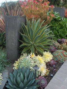 Amazing succulent ideas in 40 spectacular designs - Garten - Paisagismo Front Yard Landscaping Simple, Backyard Garden, Succulents Garden, Garden Landscape Design, Desert Landscaping, Modern Garden, Xeriscape, Outdoor Gardens, Garden Design