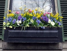 A Proper Bostonian: Yellow Magnolias Window Box Plants, Window Box Flowers, Window Planter Boxes, Fake Flowers, Flower Boxes, Yellow Magnolia, Annual Plants, Container Flowers, Clematis