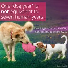 One Dog Year Doesn T Equal Seven Human Years Dog Ages Dog Years