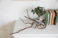 美しくておしゃれなアクア盆栽