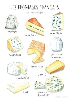 Watercolor food illustration - French Cheese - Nathalie Ouederni www.nathalieouederni.com