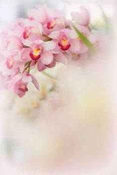 Blooming Soft Pink Orchids ~ VoyageVisuelle ✿⊱╮ (via Pin by Andrea A Elisabeth ✿⊱╮VoyageVisuelle on Feminine Charm and Lit…) Pretty In Pink, Pink Flowers, Beautiful Flowers, Romantic Flowers, Flower Backgrounds, Flower Wallpaper, Decoupage, Orquideas Cymbidium, Bloom