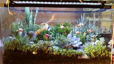 Succulent fish tank