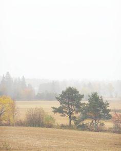 Foggy days. @kuulas_valo on Instagram