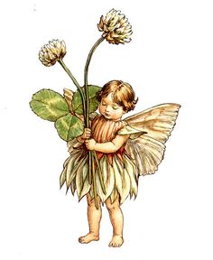 The Song Of The White Clover Fairy by Cicely Mary Barker in Fairy Rings at lair2000