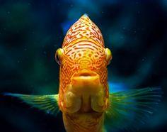 Participa hasta el 31 de agosto en el XI Concurso de Fotografía El Foton elfoton.com #elfoton15 categoría #Fauna Usuario: celta4 (Argentina) - Fish - Tomada en Buenos Aires el 27/03/15 #photos #travel #viajes #igers #500px #Picoftheday #Fotos #mytravelgram #tourism #photooftheday #fotodeldia #instatravel #contest #concurso #instapic #instaphotomatix #wanderlust #fish #pez #tropical #BuenosAires #Argentina